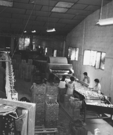 •Juan García Muñoz, der das Unternehmen leitete, beschloss seine Söhne Domingo, José, Juan, Antonio und Mariano García Lax in die Gesellschaft aufzunehmen. Nach deren Aufnahme begann die Erschließung neuer Märkte im Ausland, die eine Voraussetzung für das Wachstum des Unternehmens war.